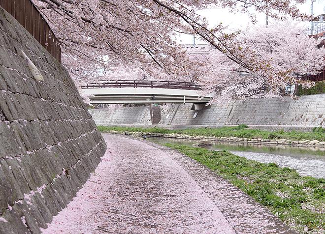 SAKURA_0414-3.JPG
