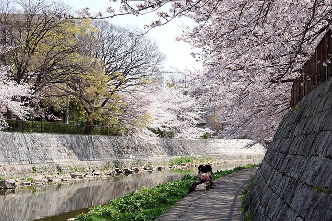 SAKURA_201304-28.jpg