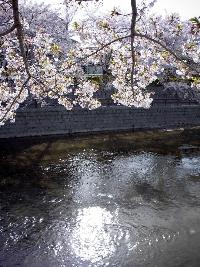 SAKURA_201304-42.jpg