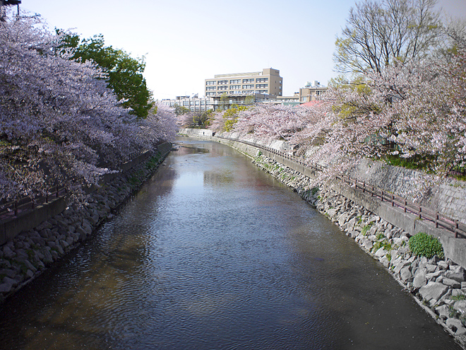 SAKURA_201304-49.jpg
