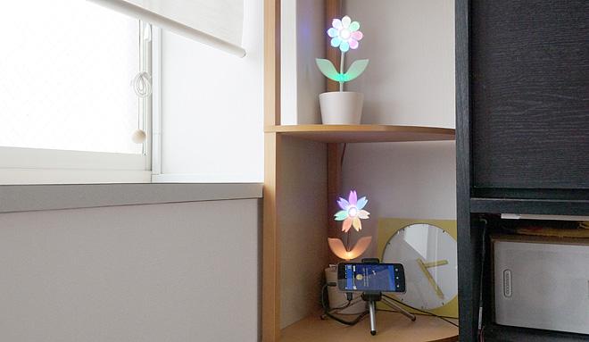 Flower-Rock2-5.jpg
