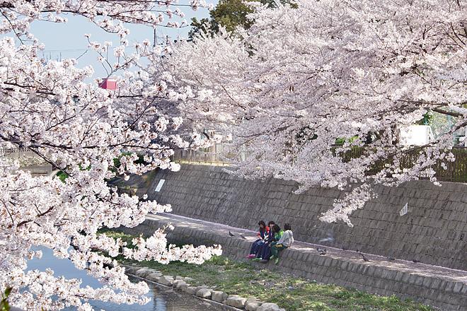 SAKURA_2012-4.jpg