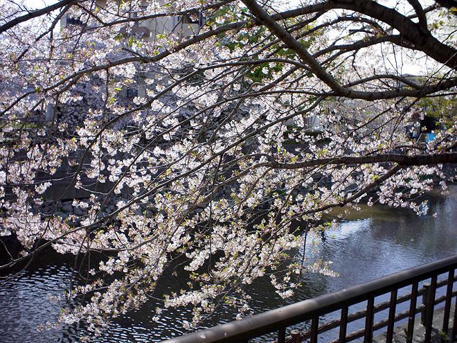 SAKURA_201304-39.jpg