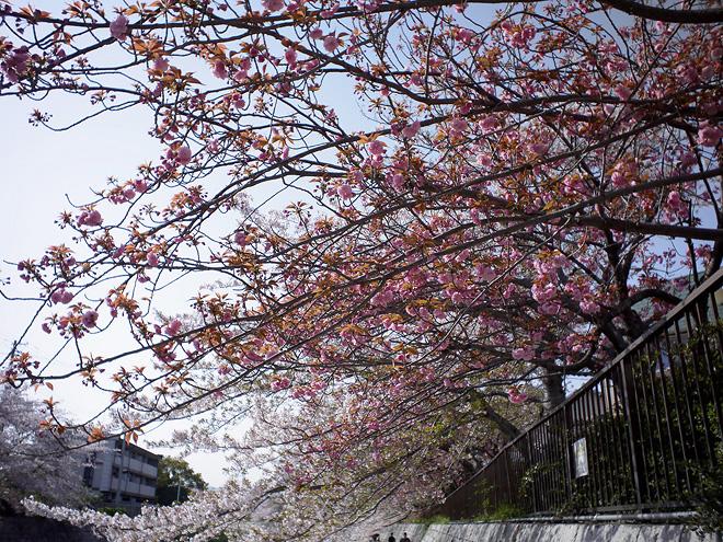 SAKURA_201304-41.jpg