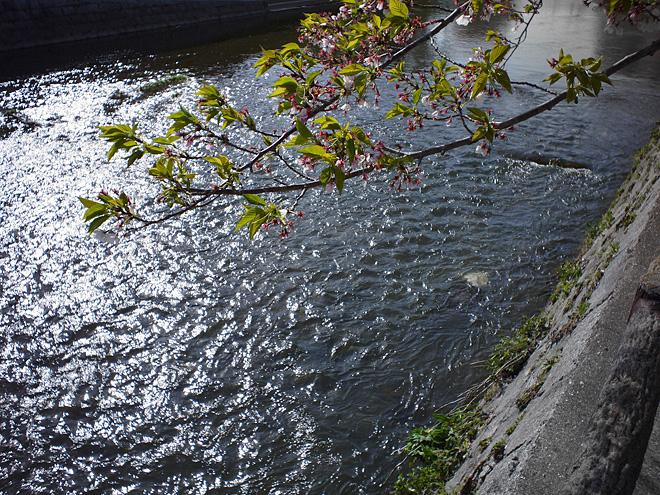 SAKURA_201304-45.jpg