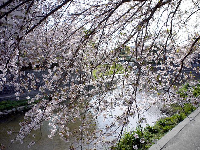 SAKURA_201304-48.jpg
